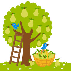 Vector Illustration of a pear tree, a ladder and a basket with harvested  pears.