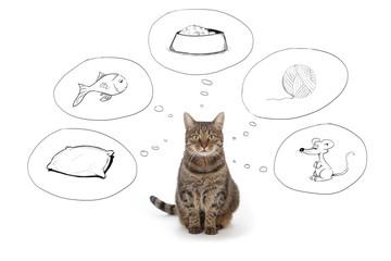 pensées de chat