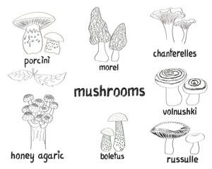 Set of hand drawn mushrooms. Doodle illustrations isolates on white.