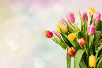 tulipani su sfondo colorato