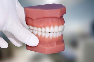dentist hand show dental jaw model