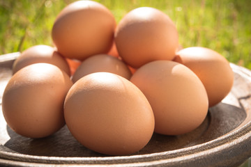 Eggs in wood tray on grass yard