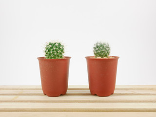 The little green cactus in small plant pot on wooden tray for home decoration.