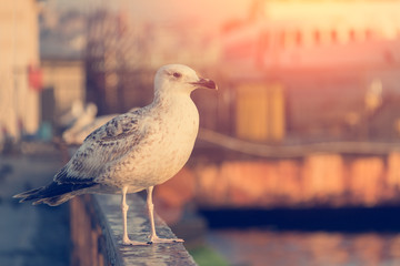 Seagull against a background of water. It stands on the parapet.background of the ship