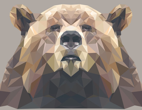 Brown bear portrait. Abstract low poly design. Vector illustration.
