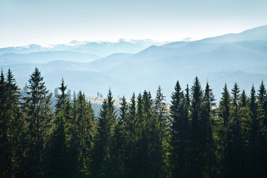 Mountain landscape with trees