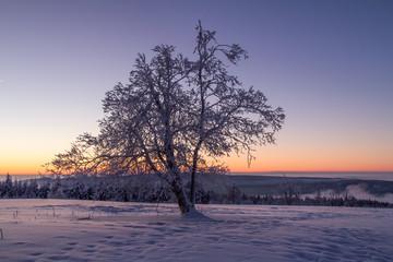 Winterliche Morgenstimmung auf dem Kahlen Asten