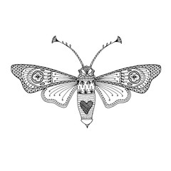 Butterfly moth black hand-drawn outline. Delicate adult coloring book design to relieve stress. Vector EPS 10