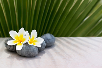 Plumeria flower and stones on palm background