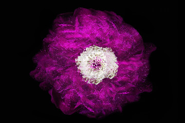 Purple rose on the dark background