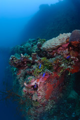 Sunken ship become a home for many corals and fishes.