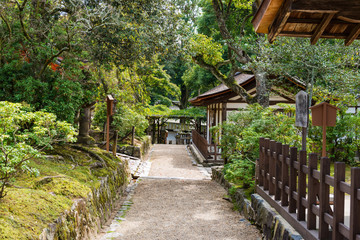 Path through Japanese forest in early Autumn