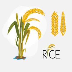 rice set. letter - vector
