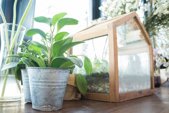 Small plant pot displayed beside the window