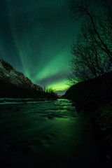 Fototapete - Aurora borealis (Northern Lights) in Norway