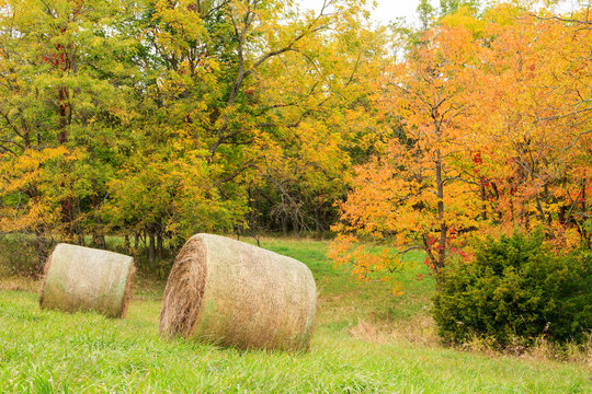 Two hay bales sitting in a field surrounded by trees with fall colors.