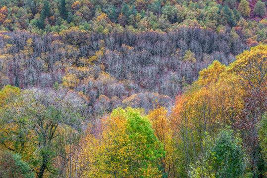 Courel, colores de otoño