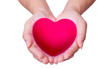 pink heart in man hands, isolated on white background.