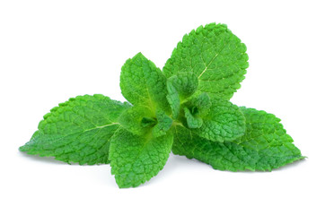Sprig of mint isolated on white background.