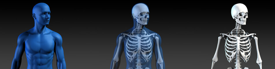 Transparent Human with Bone Structure