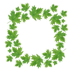 Watercolor summer maple leaves wreath on white background.