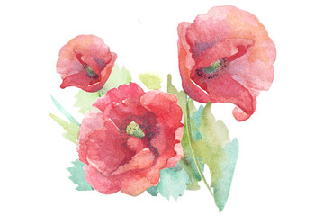 watercolor flowers poppies
