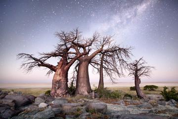 Photo sur Aluminium Baobab Baobab on Kubu island