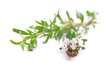 Twigs of herb thyme isolated on white background