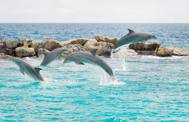 Jumping dolphins in the blue sea