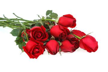 Rose, isolated on white background