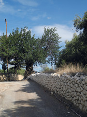 Weg mit Olivenbaum