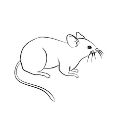 Black  sketch of the mouse