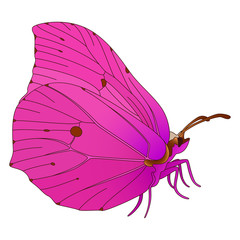 Vector butterfly.