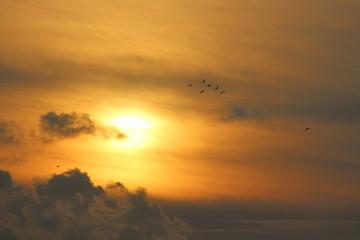 Günbatımı ve Martılar 2
