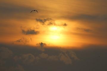 Günbatımı ve Martı 2