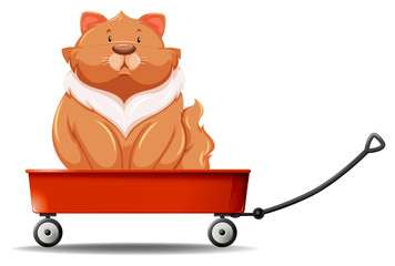 Fat cat sitting on the wagon