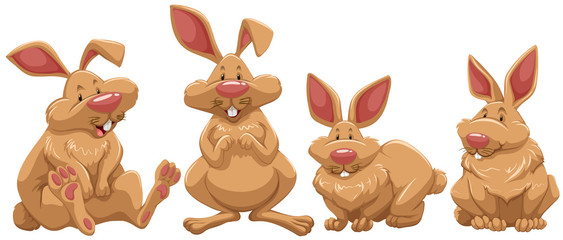 Four rabbits with brown fur