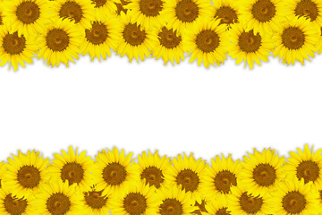 Abstract background made of Sunflowers with white space for text
