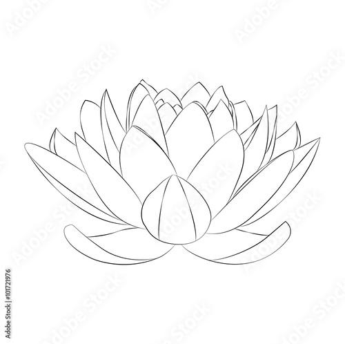 Lotus Flower Vector On White Fiore Di Loto In Bianco E Nero