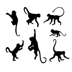 Monkey Silhouette Collection - Illustration