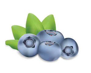 Blueberry for your design