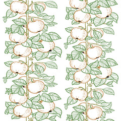 Seamless line pattern of the branches of the apple trees with ap
