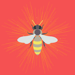 Honey bee logo template. Apiary vector symbol. Honey bee icon. Isolated vector illustration can be used as a logo, icon, pictogram or an infographic element. Perfect for your design.