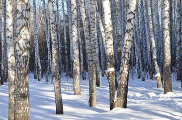 Берёзы в снегу.