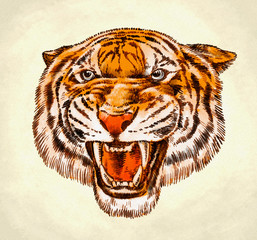 engrave ink draw tiger illustration