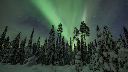 Wall Mural - Northern lights timelapse in Lapland forest sliding pan scene