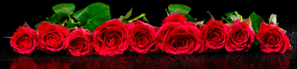 Panoramic image of red roses with dew drops on a black backgroun