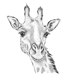 Hand draw giraffe portrait. Hand draw vector illustration
