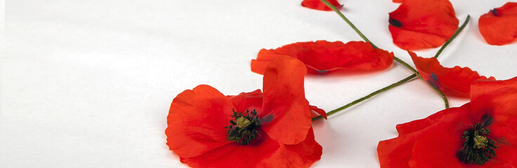 Poster Poppy Poppies - for Remembrance Day - Isolated on White - Panorama background texture.