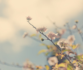 Beautiful spring background, blossoming tree on a background of